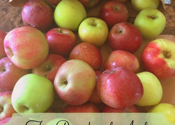 Fun Roundup of Apple Themed Crafts, Recipes and Activities